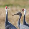 今年は酉年ということで撮りためた野鳥の画像を見てください