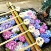 【京都】【御朱印】『藤森神社』に行ってきました。京都観光  女子旅 あじさい 主婦ブログ
