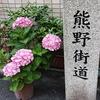 【熊野街道】古代上町半島の龍(ドラゴン)の背を歩く