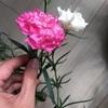 再び開花!