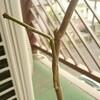 枝からポッキリ、ジャカランダ