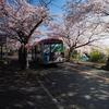 伊豆高原桜並木をみて、てこ生誕祭に行ってきました