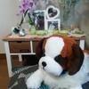 【ペットロスについて】愛犬を亡くした飼い主が考えていること