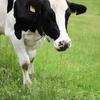 milk にはゲスな意味があった!ネイティブが使う milk の使い方。
