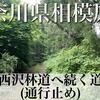 【動画】神奈川県相模原市 西沢林道へ続く道(通行止め)