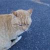 温泉街の猫