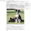 【スイス犬猫事情】動物先進国スイスのティアハイムで動物保護を学ぶ