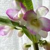 冬越し後の観葉植物 1