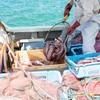 2021年7月31日 小浜漁港 お魚情報