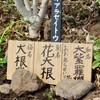「佐久の季節便り」、「西洋桜草」が冬越し、伸びはじめ…。