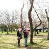 桜の木を想う。