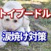 涙やけの犬の治し方はフードと小まめに拭いてあげること