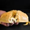 最強のはさみ持つ甲殻類は? 強度を形状から計測