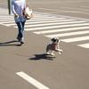 #愛犬ラブとの思い出旅行!明日出発!