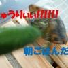 亀がきゅうりの味を知るとこうなってしまう!~ヨモギch~