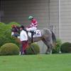 京都ダ1200m(2歳戦)種牡馬別ランキング