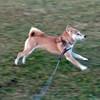 犬の認知症対策