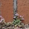 小さな花の存在感