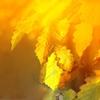 幸せの黄色いリボンをカタカナで歌ってみよう★ドーン~Tie a Yellow Ribbon Round the Ole Oak Tree~