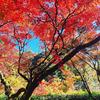 【紅葉スポット】佐賀県神崎市にある九年庵に行ってきた。歴史ある建物と紅葉の美しさが素晴らしい。9日間のみの限定で一般公開。帰りは「ほたる」というお食事処にて美味しいバイキング!休日のお出かけにおすすめです。【写真有】