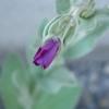 ヒトリムスメが3つ目の花を咲かす
