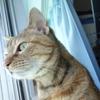 5月後半の #ねこ #cat #猫 どらやきちゃんB