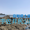 【釣り場調査】高知県土佐市・宇佐井尻公園はどんな釣り場?(サーフ・地磯)