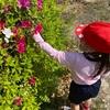 年中 ツツジの花、観察中
