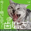 【セミナー】平日夜開催「今からでも間に合う!猫様のための歯磨きゼミ」第2弾のお知らせ