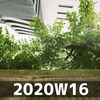 週報 2020W16