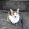 クララが立ってるならぬ猫が立ってる…!!