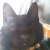 猫日記 育ちました愛猫・虎松