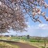 桜/2021 (2)多摩川堤防から