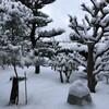 今日も雪かーい