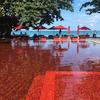 真っ赤なプールのSPG提携ホテル:ザ・ライブラリー・コーサムイ宿泊レビュー