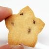 こだわりの納豆入りのヴィーガンクッキーについて