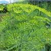農園日誌ー農園は初夏の風景へ