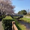 黒目川を歩く その2 都県境の神宝大橋からさいかち窪まで