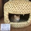 一年中猫が快適に過ごせる手作りの猫用ベッド「猫ちぐら」!
