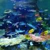 品川水族館 アクセスはイマイチだけど見ごたえがある!