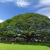 """見た人は必ず """"あの歌"""" が脳内再生されるタイ・カンチャナブリー県の巨木"""
