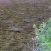 肴ならではの川魚料理『鮎の投げ網漁』