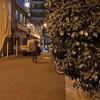 2月20日(木)静かな酒場と、満開の河津桜。
