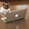 ブログの収益推移をExcelにまとめるとけっこう楽しいのでオススメ