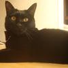 今日の黒猫モモ&白黒猫ナナの動画ー518