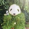 シャンシャンに逢いに上野動物園へ!実物は、良く動いてとにかく可愛かった♡