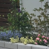 真夏の上げ床花壇