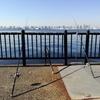 若洲海浜公園で釣りをしてきた