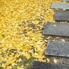 21日は弘法大師さまの御縁日。お砂踏みでご縁を結んでくださいませ。