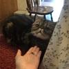 猫好きにはたまらない⁈富士サファリパークの猫の館。